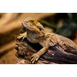English Books Terraristic