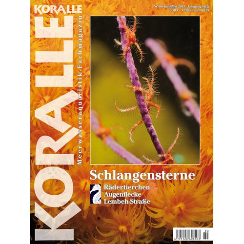 KORALLE 80 - Schlangensterne (April/Mai 2013)