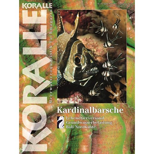 KORALLE 92 -  Kardinalbarsche (April / Mai 2015)