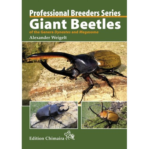 Giant Beetles